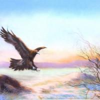 Aigle noir / pastels - 80x60cm