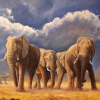 Éléphants / huile - 2013